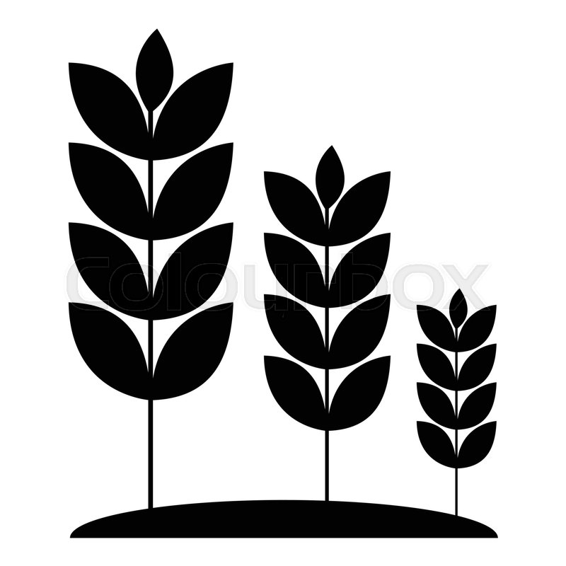 800x800 Wheat Germ Icon. Simple Illustration Of Wheat Germ Vector Icon