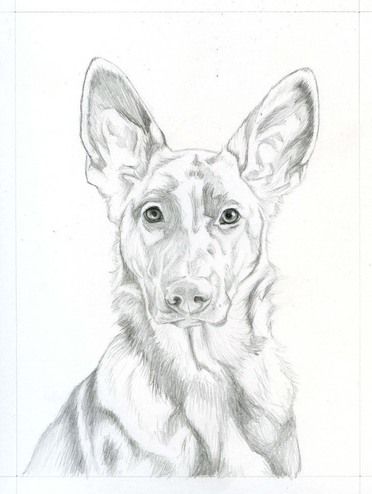German Shepherd Dog Drawing