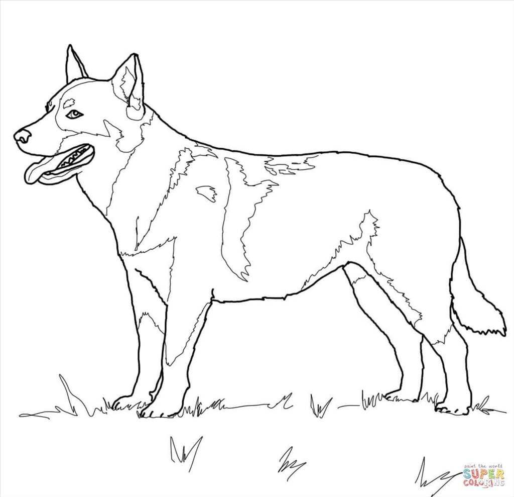German Shepherd Drawing