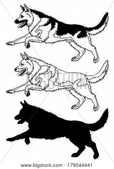 235x348 German Shepherd