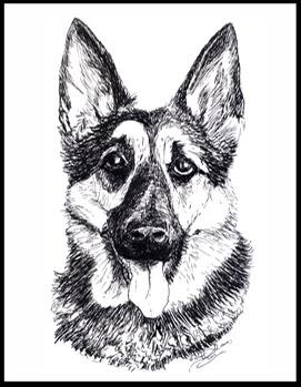 271x349 German Shepherd Cards Animal Art By Stephanie Grimes Stephanie