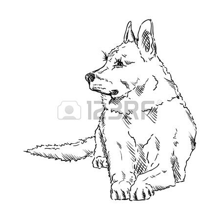 450x450 German Shepherd Cartoon Stock Photos. Royalty Free Business Images