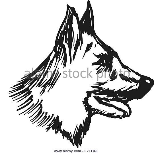 541x540 German Shepherd Dog Stock Vector Images