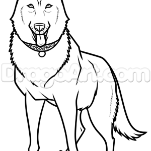 300x300 Delightful Black German Shepherd Drawing, Stepstep, Pets, Animals