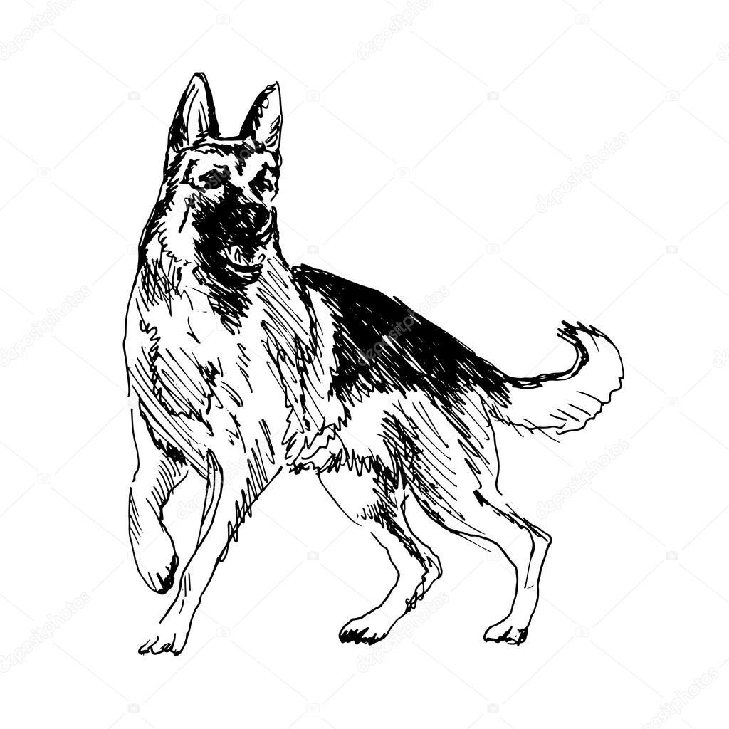 1024x1024 German Shepherd Stock Vector Onot