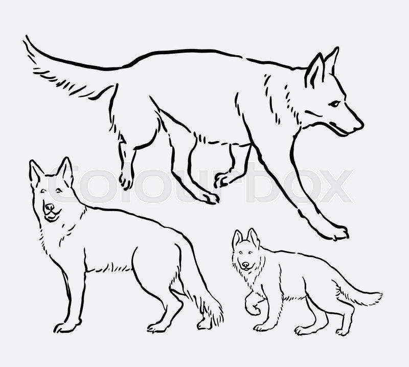 800x718 German Shepherd Pet Dog Mammal Animal Sketch. Good Use For Symbol