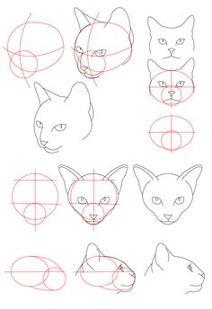 236x344 How To Draw German Shepherd Dog Face Printable Step By Step