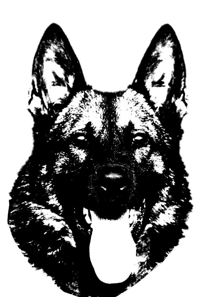 683x1024 Black And White K9 Head (German Shepherd) K9 Training Den
