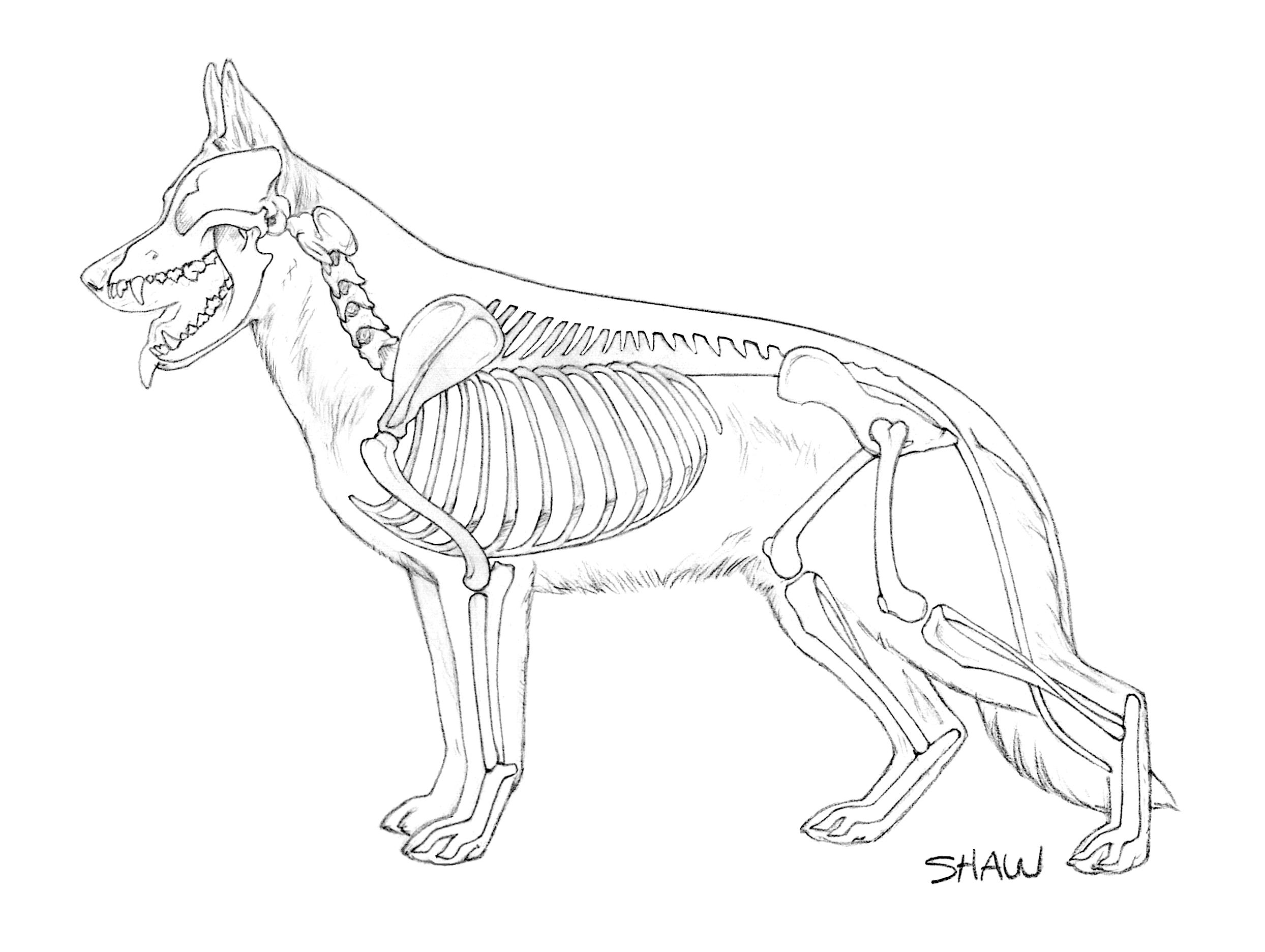 2488x1872 The German Shepherd Dog Blog