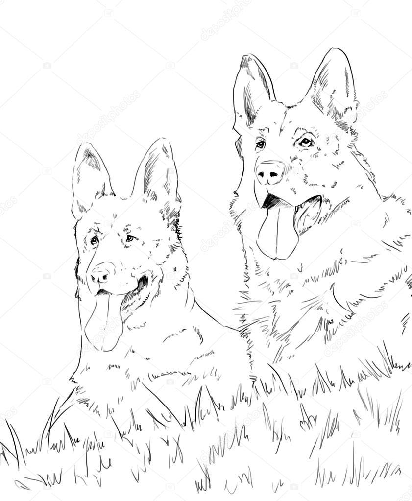 german shepherd pencil drawing at getdrawings free