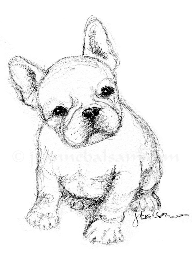 735x985 Just A Quick Sketch Of A French Bulldog Puppy On A Sunday