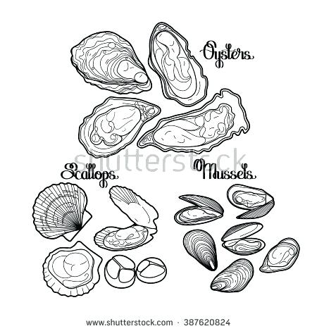 450x470 Clam Coloring Page Graphic Vector Mussels Oysters And Scallops