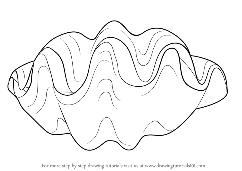 800x566 Learn How To Draw A Giant Clam (Mollusks) Step By Step Drawing