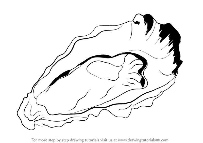 800x562 Learn How To Draw An Oyster (Mollusks) Step By Step Drawing