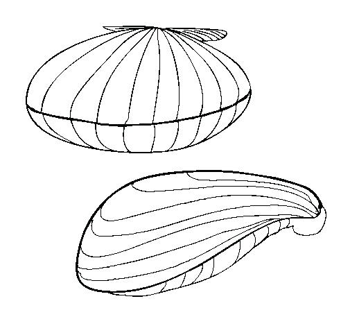 505x470 Clam Coloring Page