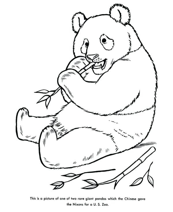 600x734 Giant Panda Coloring Pages Baby Panda Coloring Pages Giant Panda
