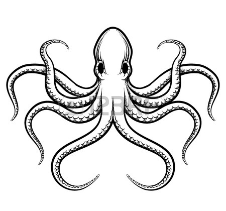 450x420 8,901 Squid Stock Illustrations, Cliparts And Royalty Free Squid