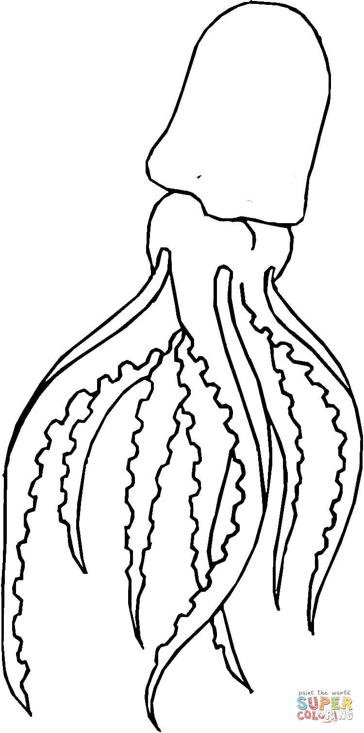750x1511 Giant Squid coloring page Free Printable Coloring Pages