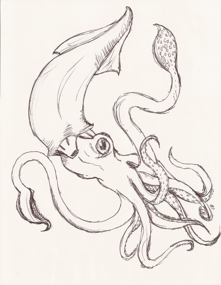 736x947 Pin By Nicole Roland On Giant Squid, Octopus, Ship