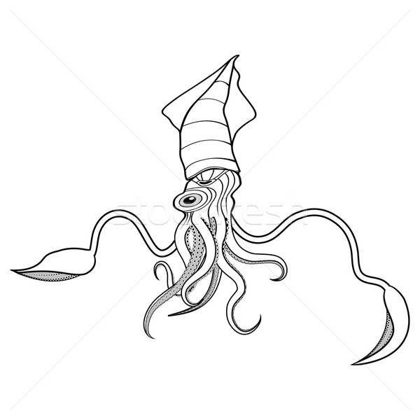 600x600 Giant Squid Illustration Vector Illustration Sweet Lana