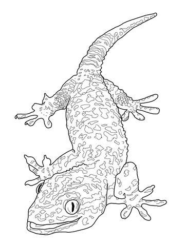 Gila Monster Drawing
