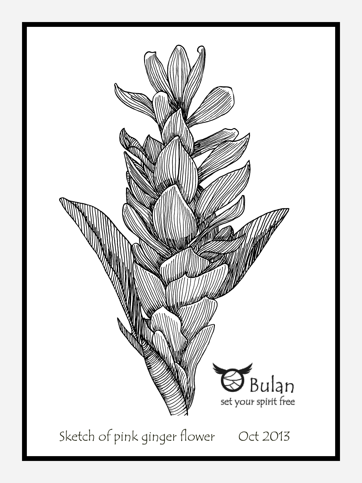 1200x1600 Sketch Of The Day No 169 Pink Ginger Flower In Penang The Crazy