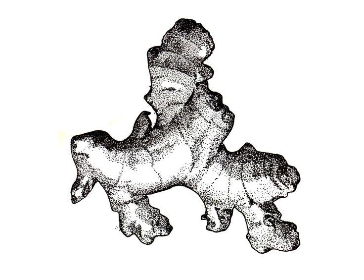 736x565 Ginger Illustration