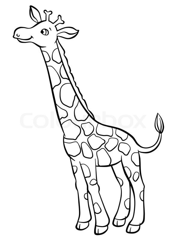 566x800 Cute Giraffe Eating Leaves From The Tree Stock Photo Colourbox