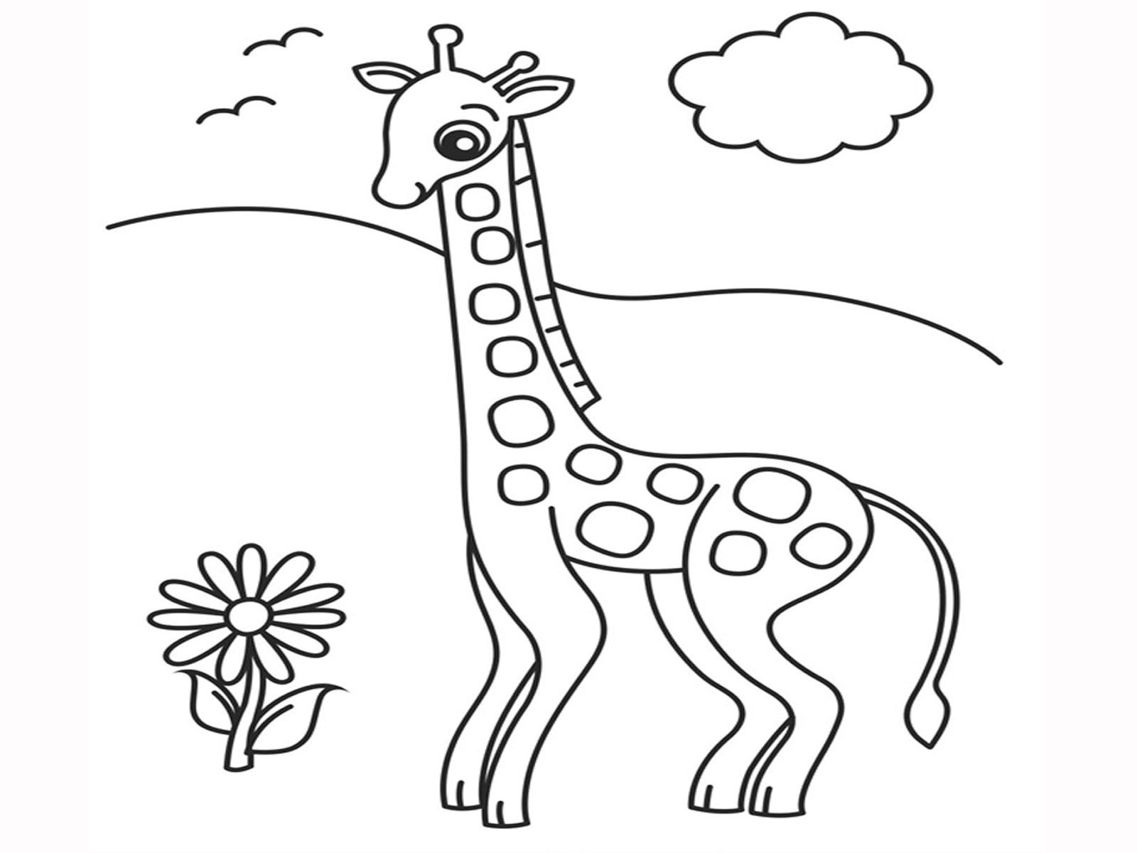 1600x1200 Giraffe Descprition And Facts