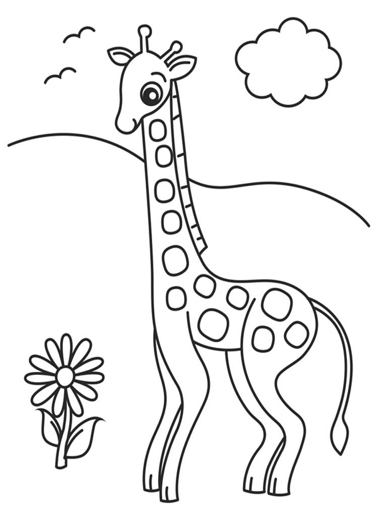 768x1024 Giraffe