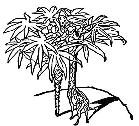 480x436 Giraffe Drawing