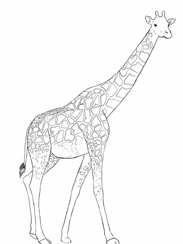 768x1024 Giraffe Drawing