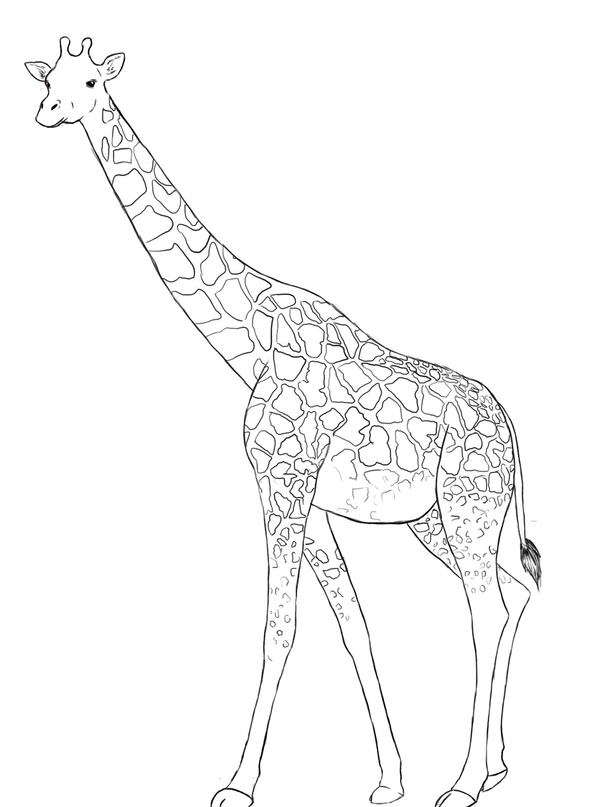 1200x1600 Giraffe Drawing Free Draw To Color