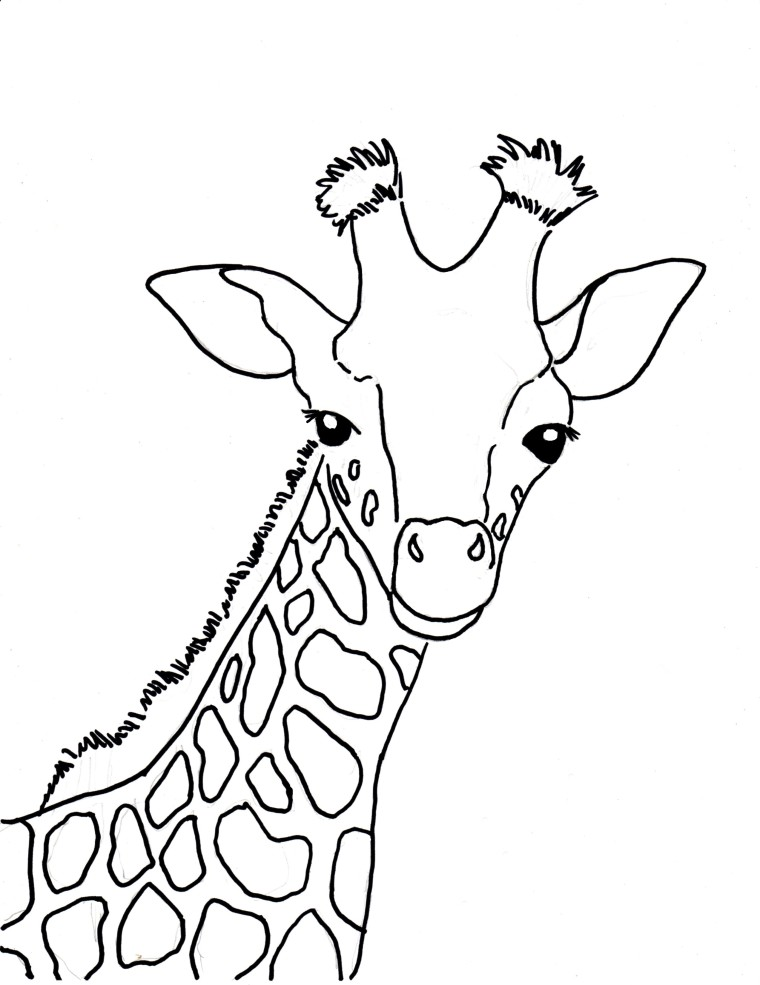 760x985 Baby Giraffe Coloring Page