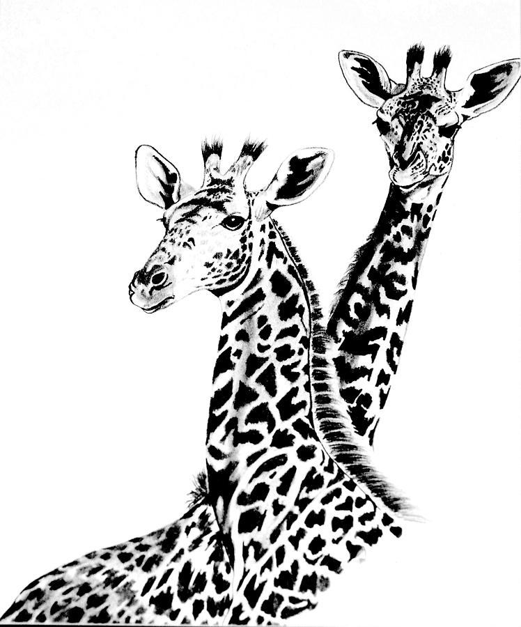 748x900 Giraffes Drawing By Cheryl Poland