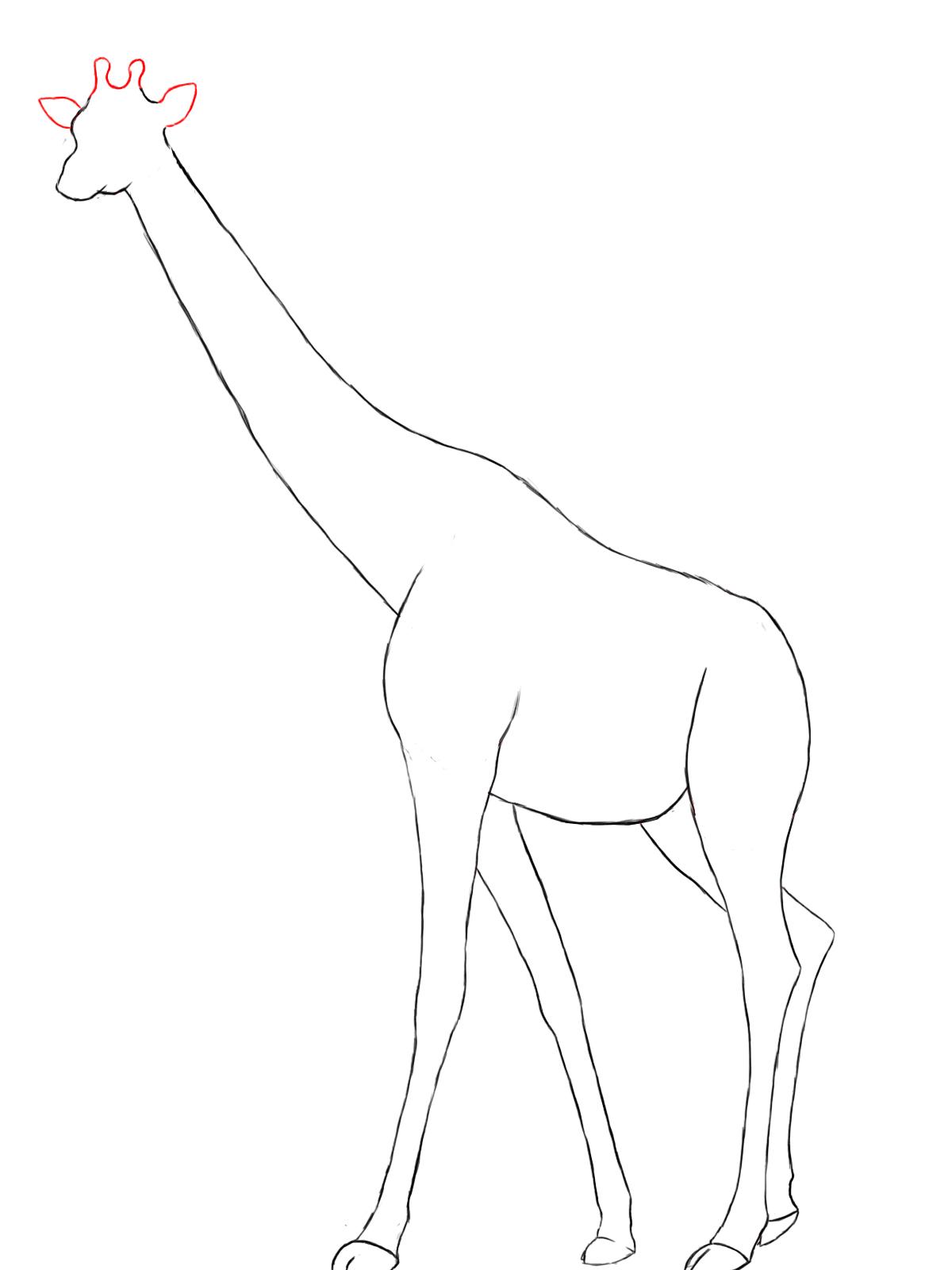 1200x1600 How To Draw A Giraffe