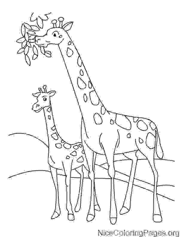612x792 How To Draw Giraffe Step By Step