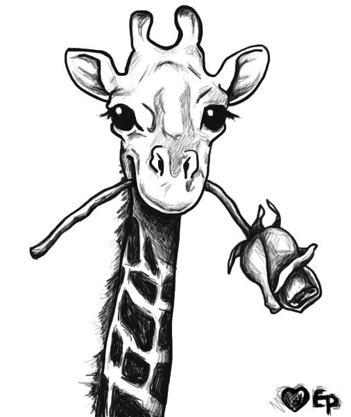 506x600 Giraffe Drawing