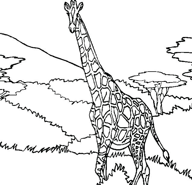 638x615 Cute Giraffe Coloring Pages Giraffe Coloring Pages Majestic