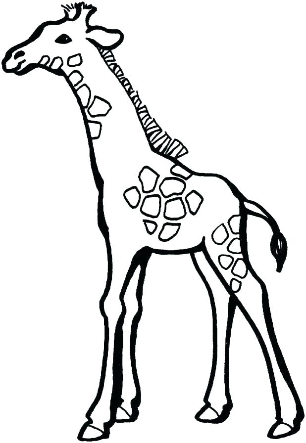 618x896 Giraffe Coloring Pages To Print Download Free Baby Giraffe Drawing