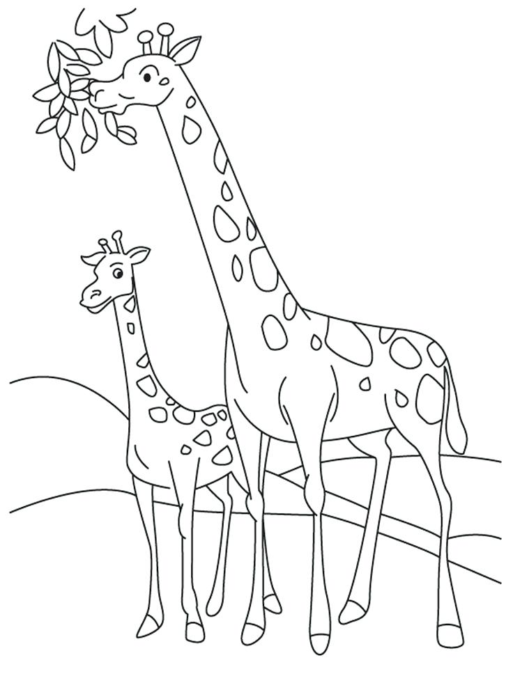 736x981 Cute Giraffe Coloring Pages Little Giraffe Coloring Page Vector