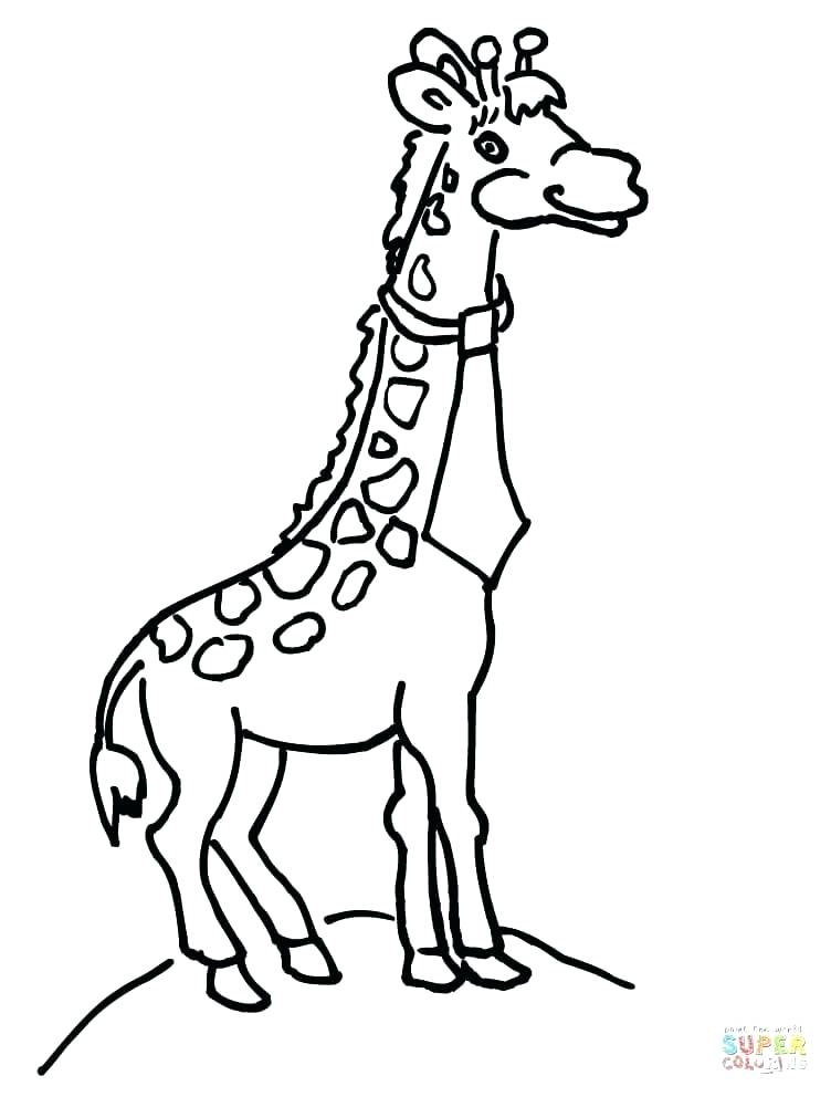 752x992 Baby Giraffe Coloring Pages Also Download Free Baby Giraffe