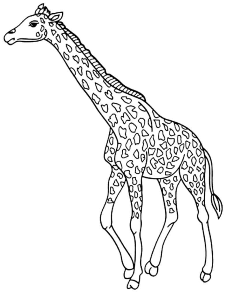 783x1009 Cute Giraffe Coloring Pages