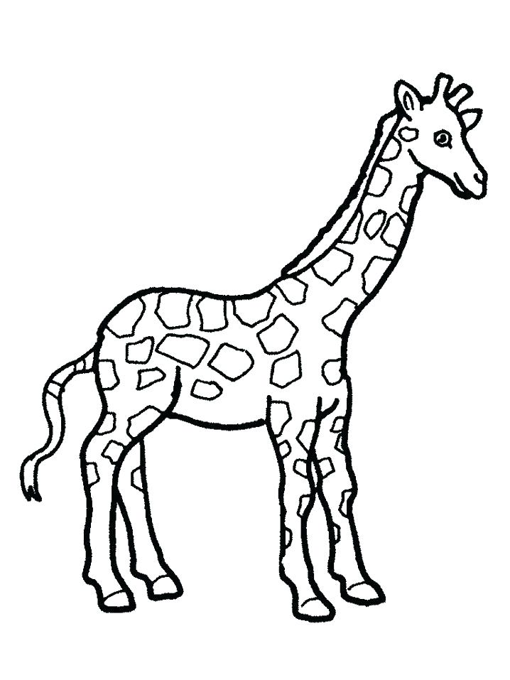 718x957 Giraffes Coloring Pages