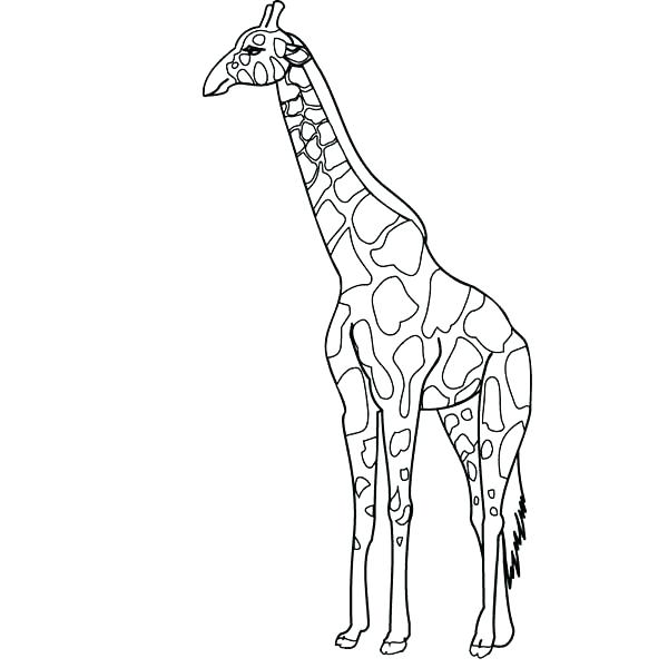 600x600 Coloring Page Giraffe Cute Coloring Pages Of Baby Giraffes Google