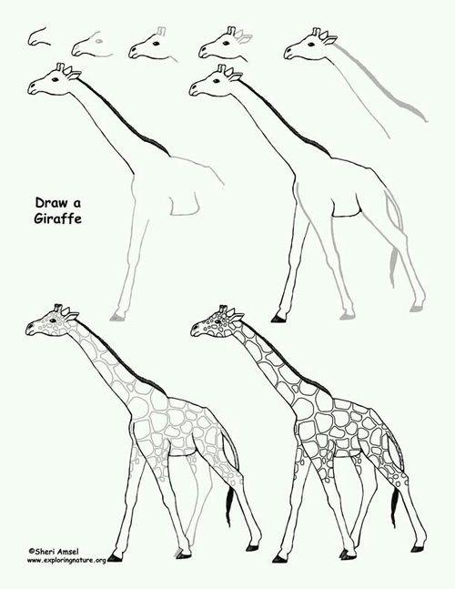 Giraffe Drawing Easy