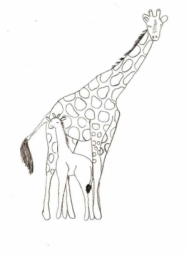 600x817 Drawing Simple Zoo Animal Drawings Together With Simple Sea