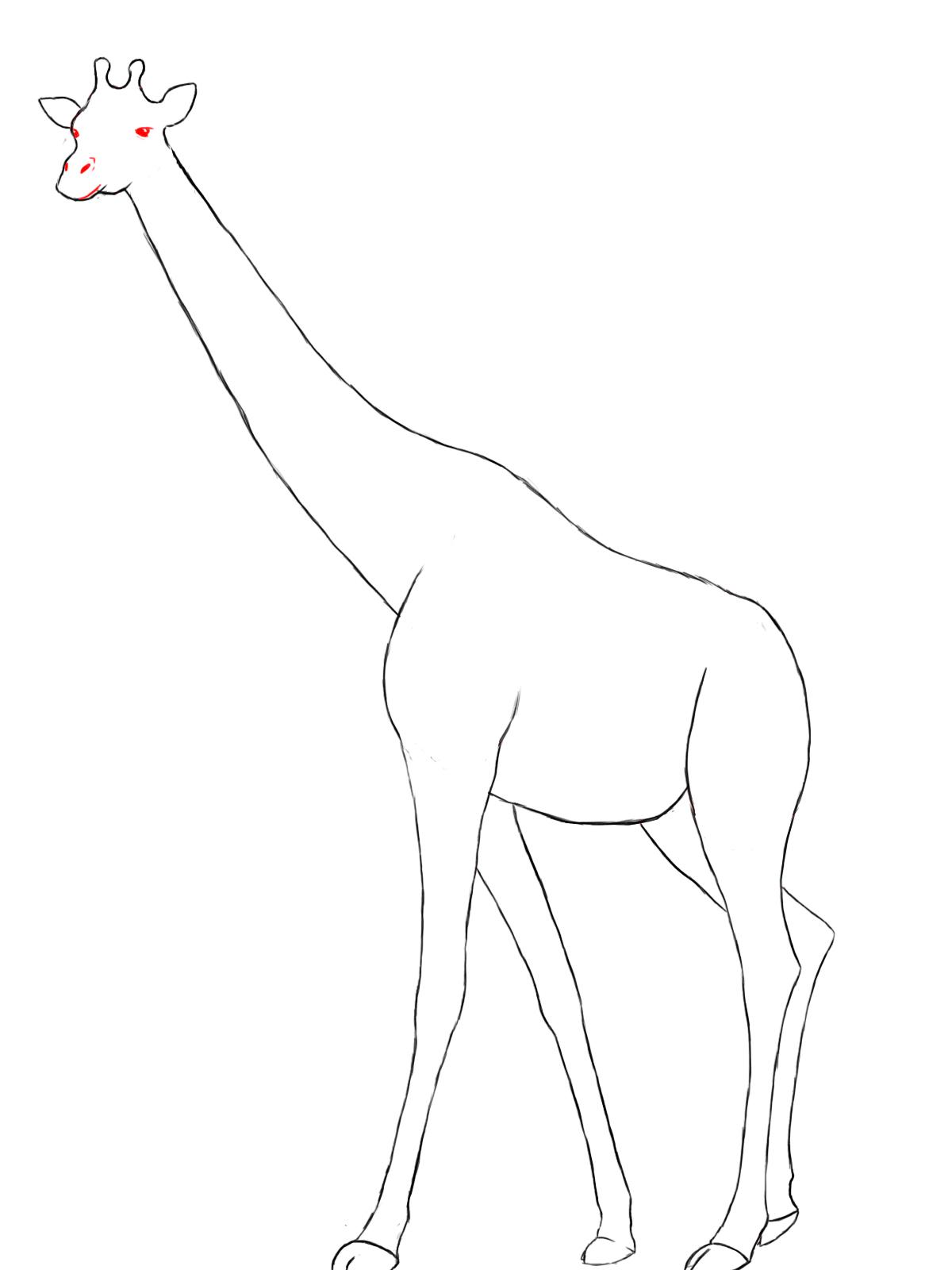 1200x1600 Drawing Of A Giraffe Giraffe
