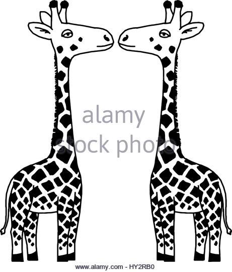 461x540 Drawing Of A Giraffe Stock Photos Amp Drawing Of A Giraffe Stock