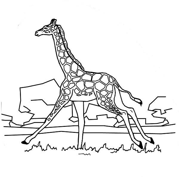 Giraffe Drawing Easy at GetDrawings.com | Free for ...